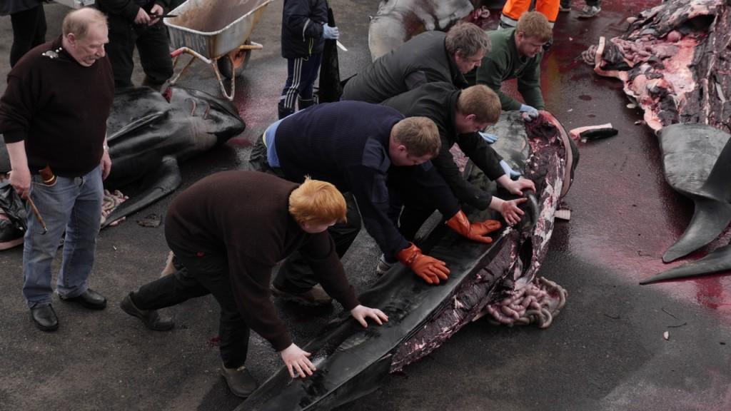 Gemeinsam werden die Wale gefangen und zerlegt